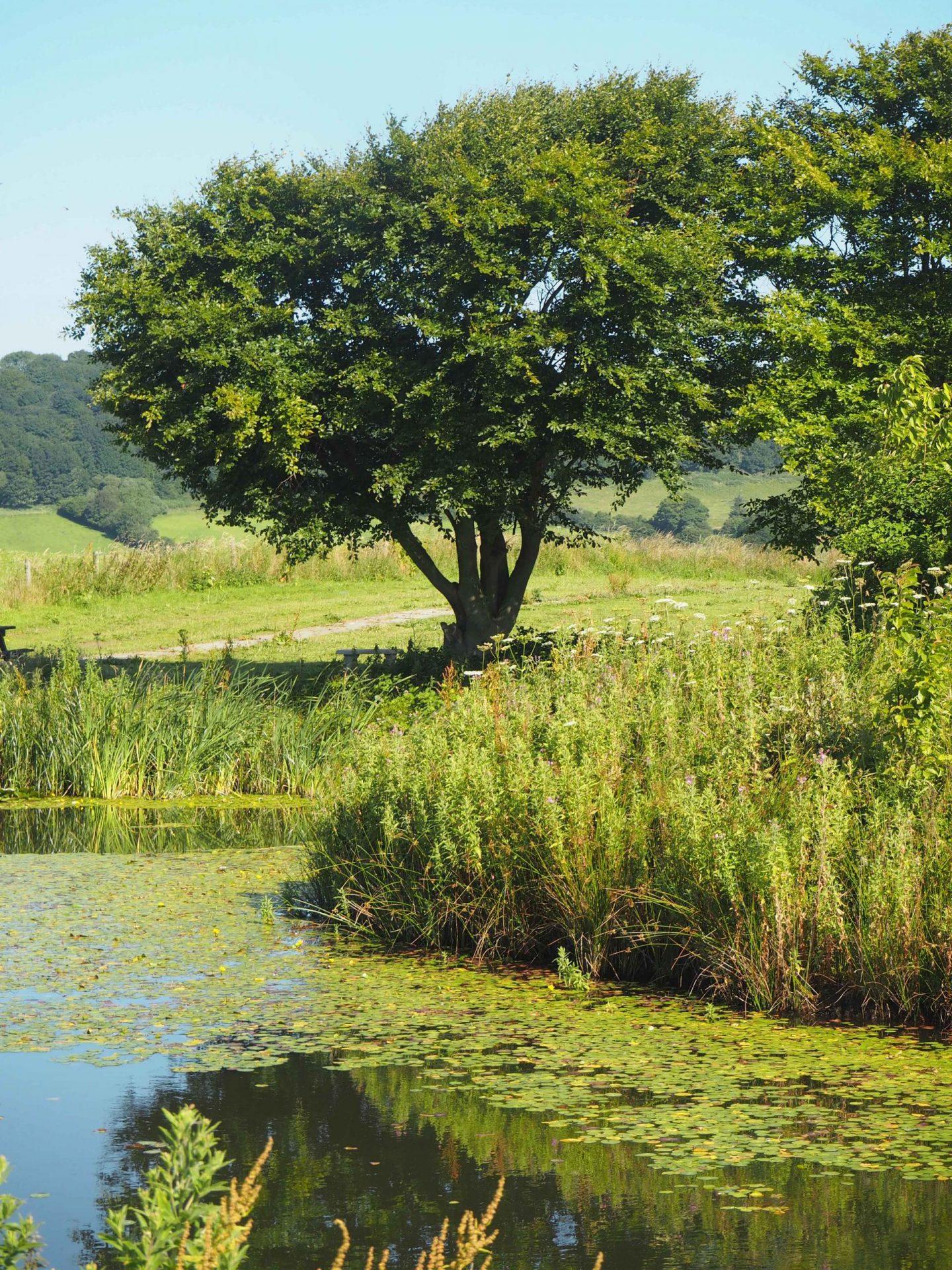 Ox Pasture Hall, Scarborough, North Yorkshire - Rachel Nicole UK Travel Blogger 2