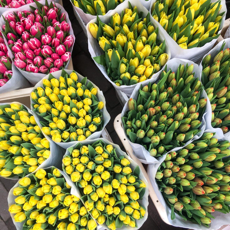 Three Days in Amsterdam, Bloemenmarkt - Rachel Nicole UK Travel Blogger