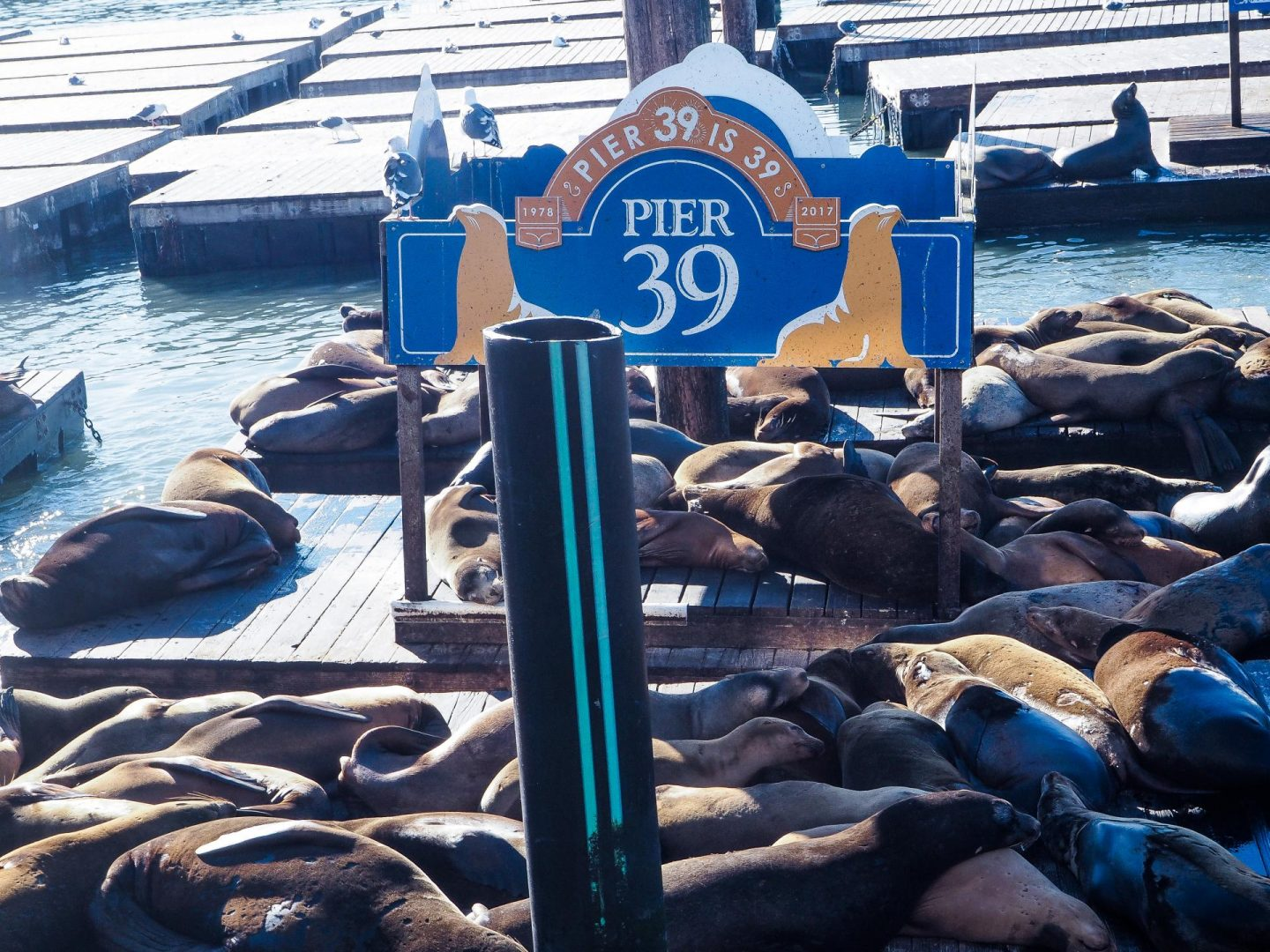 Pier 39, San Francisco - Rachel Nicole UK Travel Blogger