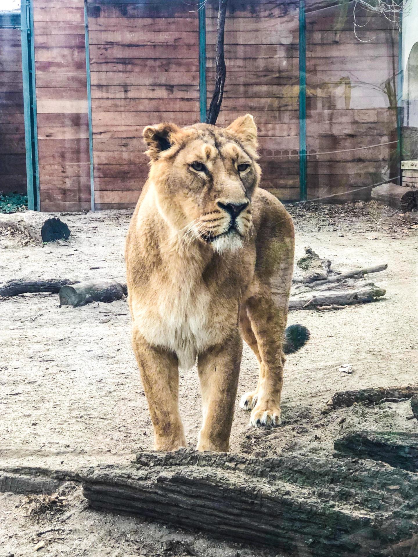 Four Days in Budapest, The Zoo - Rachel Nicole UK Blogger